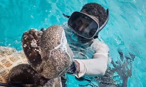 Αυτό είναι το πολύτιμο «αγγούρι της θάλασσας» - Γιατί στοιχίζει 3.000 το κιλό