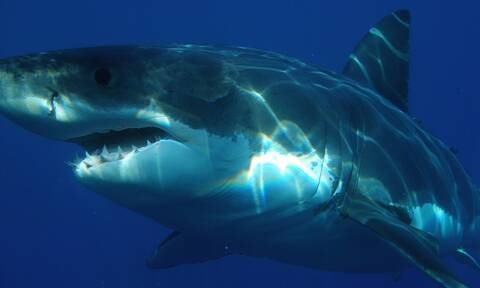 Ήθελε να... τσεκάρει αν το αίμα προσελκύει τους καρχαρίες – Δείτε τι ανακάλυψε! (pics)