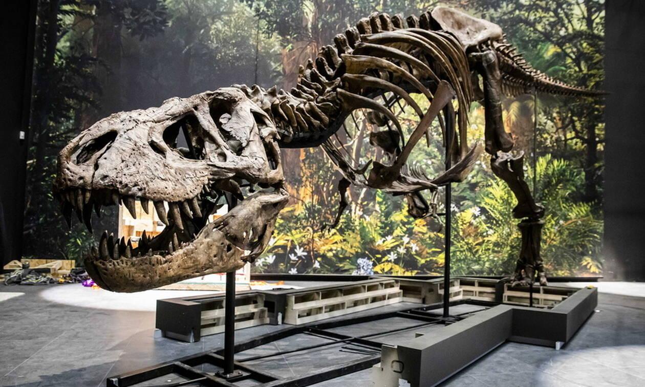 Ο T-Rex βρίσκεται επιτέλους... σπίτι του (pics)