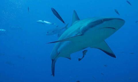 Νέα Σμύρνη: Η παραλία που αγαπούν οι καρχαρίες - Τρεις επιθέσεις σε λίγες ώρες
