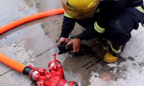 Συγκλονιστικές εικόνες: Πυροσβέστες διασώζουν από φωτιά πέντε κουτάβια με τεχνητή αναπνοή (vid)