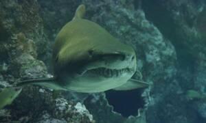 Βίντεο - ΣΟΚ: Καρχαρίας δαγκώνει δύτη (ΠΟΛΥ ΣΚΛΗΡΕΣ ΕΙΚΟΝΕΣ)