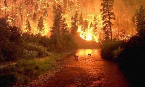 Площадь лесных пожаров в РФ за сутки возросла на 16 тыс. га