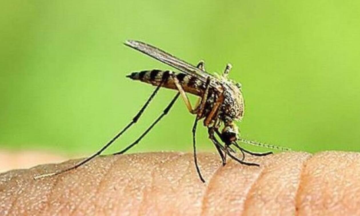 На Кипре увеличилось число заразившихся вирусом лихорадки Западного Нила