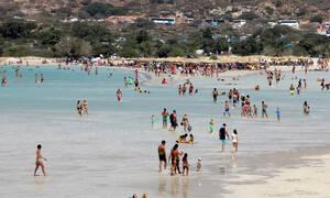 Συναγερμός: Εντοπίστηκε επικίνδυνο ψάρι στις ελληνικές θάλασσες