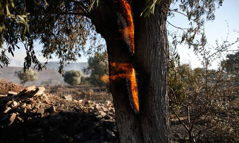 Εύβοια: Υπό μερικό έλεγχο η φωτιά στην Ερέτρια