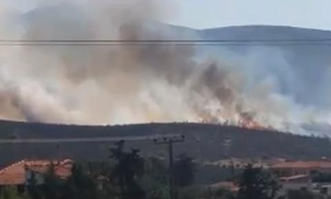 Φωτιά στον Μαραθώνα: Οι πρώτες εικόνες από την πυρκαγιά (Pics&vids)
