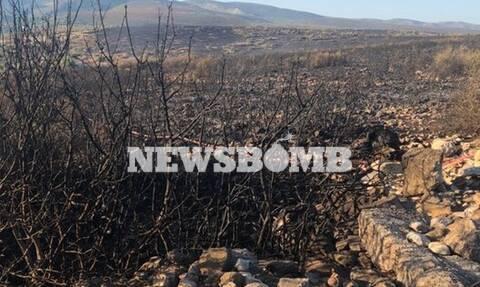 Συναγερμός σε όλη την Ελλάδα: Ξέσπασαν 59 φωτιές σε ένα 24ωρο – Κάηκαν Ελαφόνησος και Μαραθώνας
