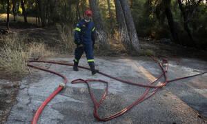 Κεφαλονιά: Τέθηκε υπό έλεγχο η φωτιά