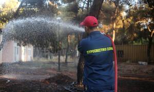 Έβρος: Υπό έλεγχο η φωτιά
