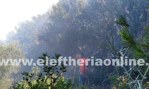 Μεσσηνία: Τέθηκε υπό έλεγχο η φωτιά στο Γλυκορρίζι