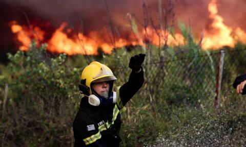 Φωτιά ΤΩΡΑ στη Βοιωτία: Πυρκαγιά στον Πρόδρομο Θήβας (ΧΑΡΤΗΣ)