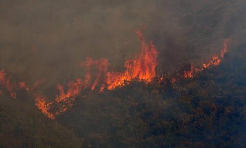 Φωτιά ΤΩΡΑ στην Εύβοια: Την εκκένωση του χωριού Μακρυμάλλη ζητά η πυροσβεστική