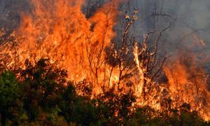Φωτιά ΤΩΡΑ: Δείτε LIVE που έχει πυρκαγιές σε όλη την Ελλάδα