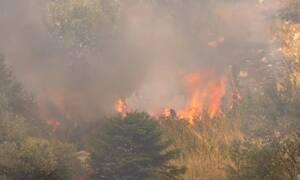 Φωτιά στη Θήβα: Ανεξέλεγκτο το μέτωπο - Κατευθύνεται προς τον Κορινθιακό κόλπο