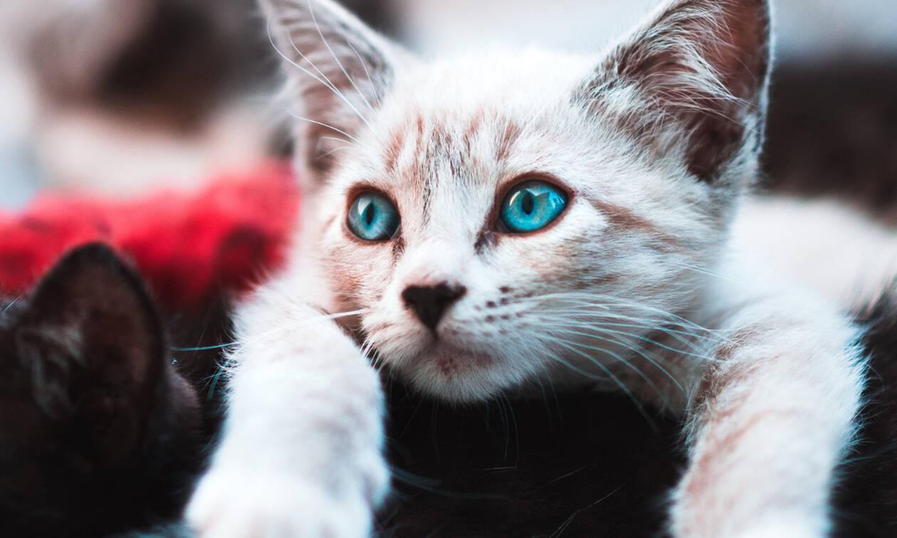 Οι γάτες και οι σκύλοι διώχνουν το άγχος μακριά