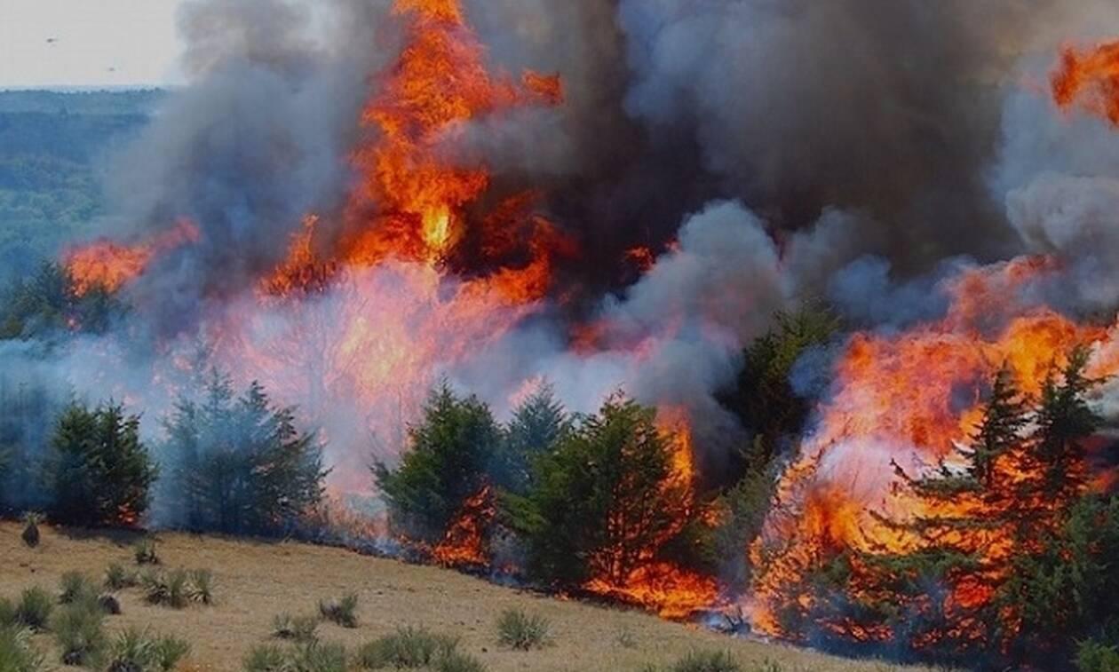 Пожар на Кипре удалось взять под контроль