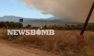 Φωτιά Εύβοια: Σε κατάσταση έκτακτης ανάγκης - Αίτημα για βοήθεια από την Ευρώπη