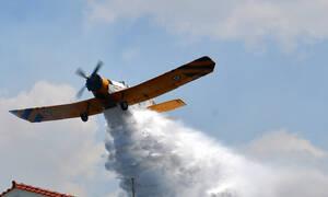 Ηλεία: Υπό μερικό έλεγχο η φωτιά στο Λευκοχώρι