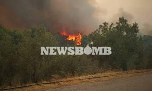 Φωτιά Εύβοια - Θρίλερ στο Μακρυμάλλη: Ηλικιωμένος δεν εγκαταλείπει το σπίτι του