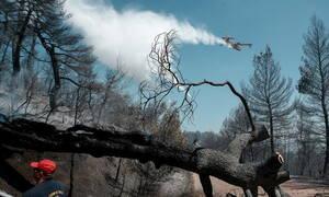 Φωτιά Εύβοια: Συνεχίζεται η μάχη με τις φλόγες - Ξεκίνησαν τα εναέρια μέσα