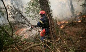 Φωτιά Βοιωτία: Υπό μερικό έλεγχο η πυρκαγιά στον Πρόδρομο Θήβας (ΧΑΡΤΗΣ)