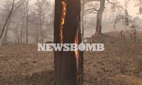 Φωτιά Εύβοια: Μάχη με τις αναζωπυρώσεις - Πού επικεντρώνει τις προσπάθειες η πυροσβεστική