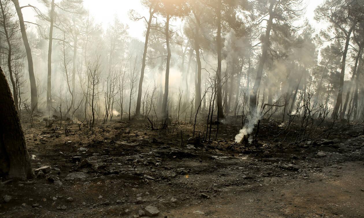 Φωτιά: «Κρανίου τόπος» η Εύβοια – Στάχτη χιλιάδες στρέμματα παρθένου δάσους (pics)