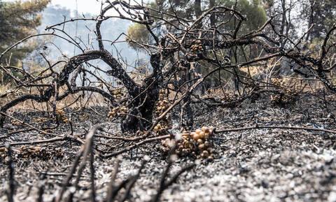 Φωτιά στην Εύβοια: Συγκλονιστικό βίντεο από την πυρκαγιά