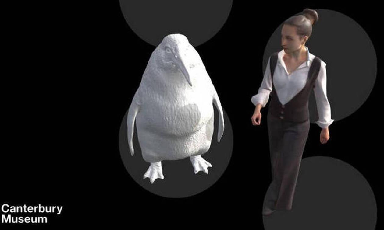 Πιγκουίνος - γίγας: Στο μέγεθος ανθρώπου το απολίθωμα που ανακαλύφθηκε στη Νέα Ζηλανδία