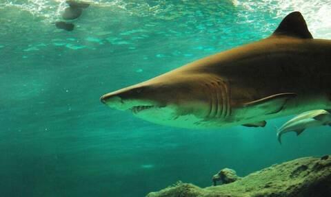 ΣΟΚ: Τεράστιος λευκός καρχαρίας άρχισε να κυκλώνει τη βάρκα τους (vid)