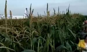 Ρωσία: Σύγκρουση στον αέρα – Δέκα τραυματίες και αναγκαστική προσγείωση σε χωράφι