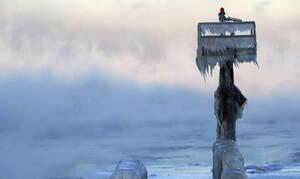 Θλιβερή ανακάλυψη: Δείτε τι βρήκαν στην Αρκτική
