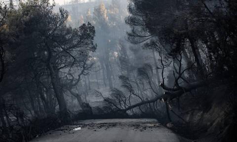 Φωτιά Εύβοια: Ενδείξεις εμπρησμού έχουν οι αρχές - Η μαρτυρία που δείχνει τον ένοχο