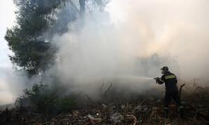 Φωτιά ΤΩΡΑ: Καίγεται περιοχή Natura και στην Κέρκυρα