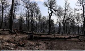 Φωτιά Εύβοια: Στάχτη και αποκαΐδια – Τα ευρήματα που δείχνουν εμπρησμό και οι τρεις ύποπτοι