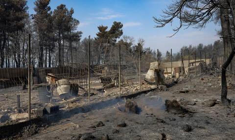 Φωτιά στην Εύβοια: Πότε θα αποζημιωθούν οι αγρότες – Όλος ο σχεδιασμός του ΥΠΑΤΤ