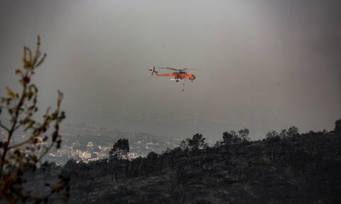 Φωτιά Εύβοια: Ανατροπή - Τι πραγματικά συνέβη με το δάσος Νatura
