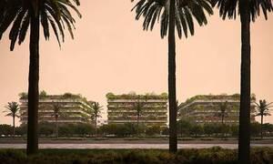 Αίγυπτος: Χτίζουν στη μέση της ερήμου... δάση!