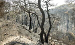 Προειδοποίηση ΣΟΚ: Έρχονται πλημμύρες μετά την φωτιά στην Εύβοια