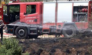 Φωτιά σε τεράστια αποθήκη επιχείρησης στη Θήβα - Έγιναν όλα στάχτη