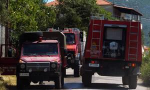 Φωτιά στην Κρήτη: Κάηκαν εκατοντάδες στρέμματα και ένα θερμοκήπιο