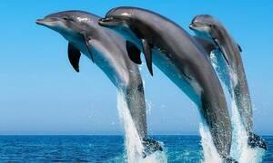 Кипрские моряки сняли играющихся у побережья Лимассола дельфинов