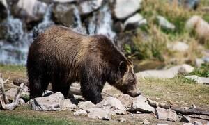 Νεκρός διάσημος μουσικός - Τον κατασπάραξε αρκούδα