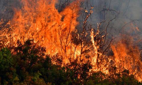 Φωτιά Τώρα: Πυρκαγιά στην Αχαϊα σε δασική έκταση