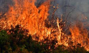 Φωτιά Τώρα: Μεγάλη φωτιά δασική πυρκαγιά στην Αχαϊα ανάμεσα σε Σανταμέρι και Πολύμορφο
