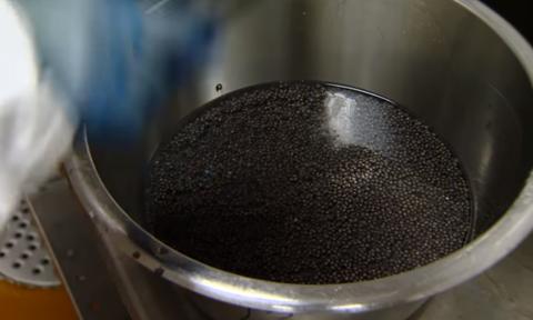 Ετσι φτιάχνεται το μαύρο χαβιάρι από τα αυγά του Οξύρρυγχου. Καρέ - καρέ η διαδικασία... (vid)