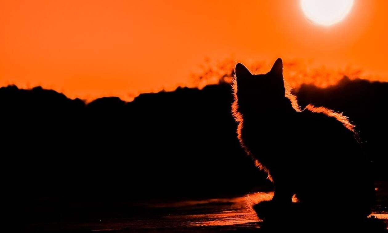 Φρίκη στα Χανιά: Βασάνισαν και σκότωσαν γάτες και τις έβαλαν στην μέση του δρόμου