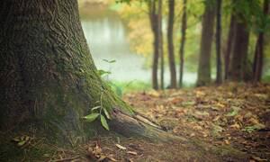 Θρίλερ στην Πάτρα: Βρέθηκε τάφος σε δασάκι – Η αποκάλυψη της αλήθειας (pics)