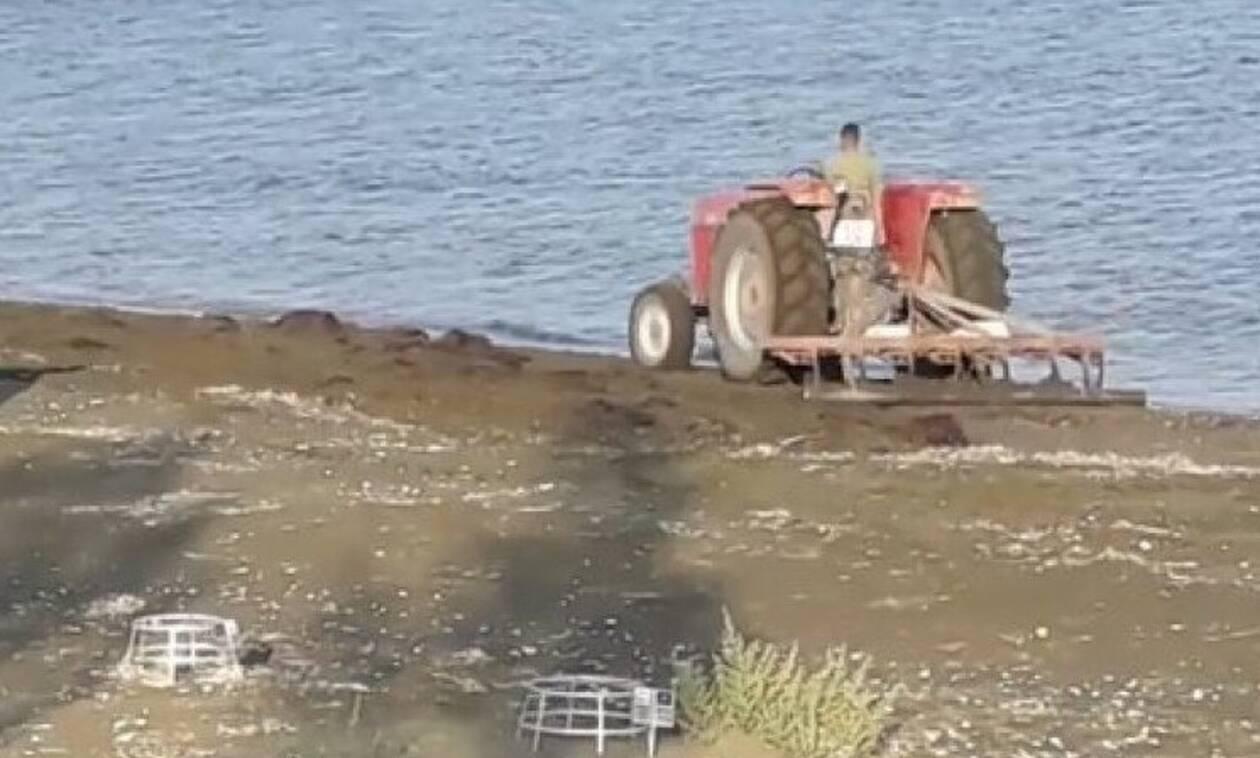 Кипрский тракторист оштрафован за въезд на пляж, где Каретта-каретта откладывают яйца